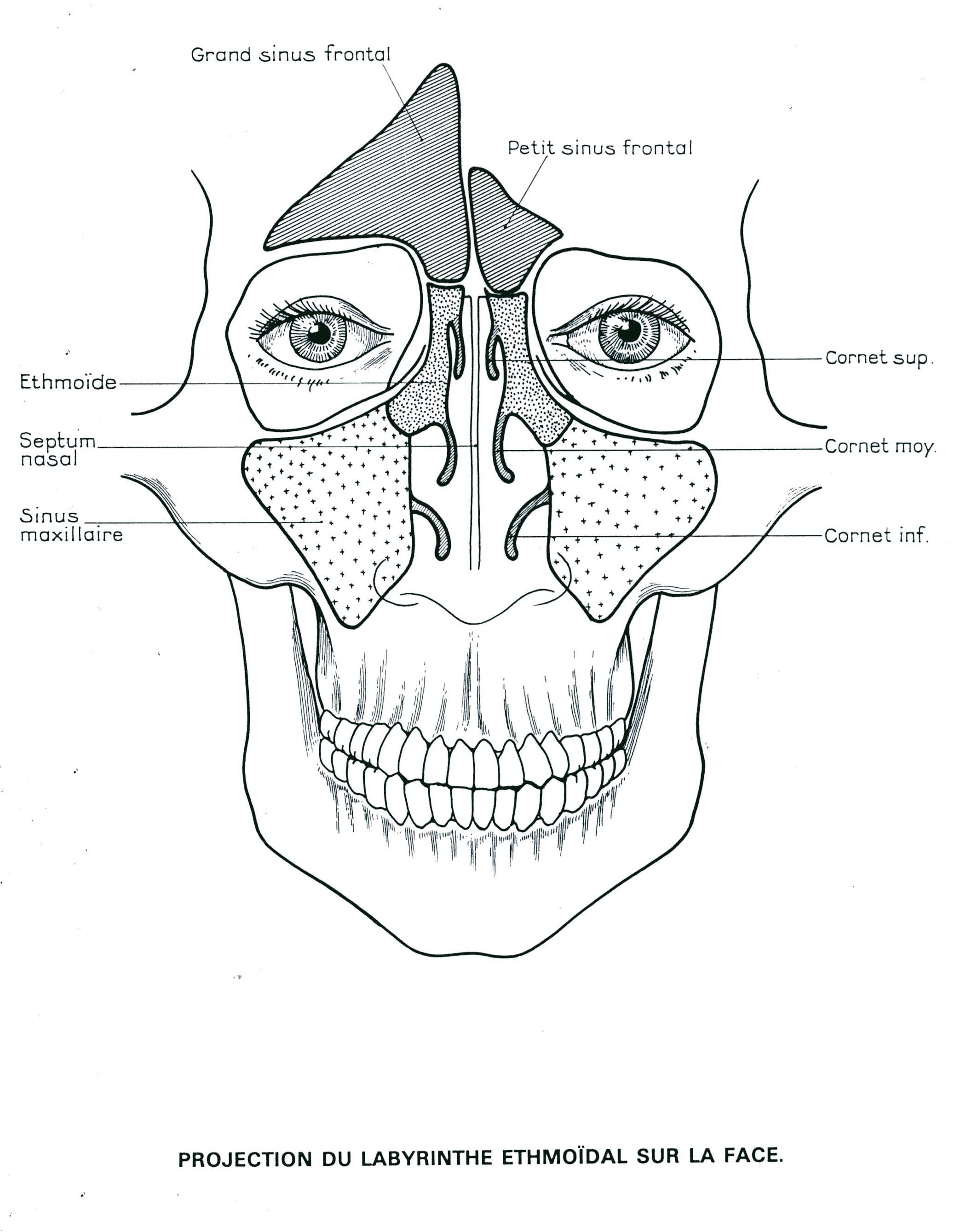 vascularisation des fosses nasales pdf